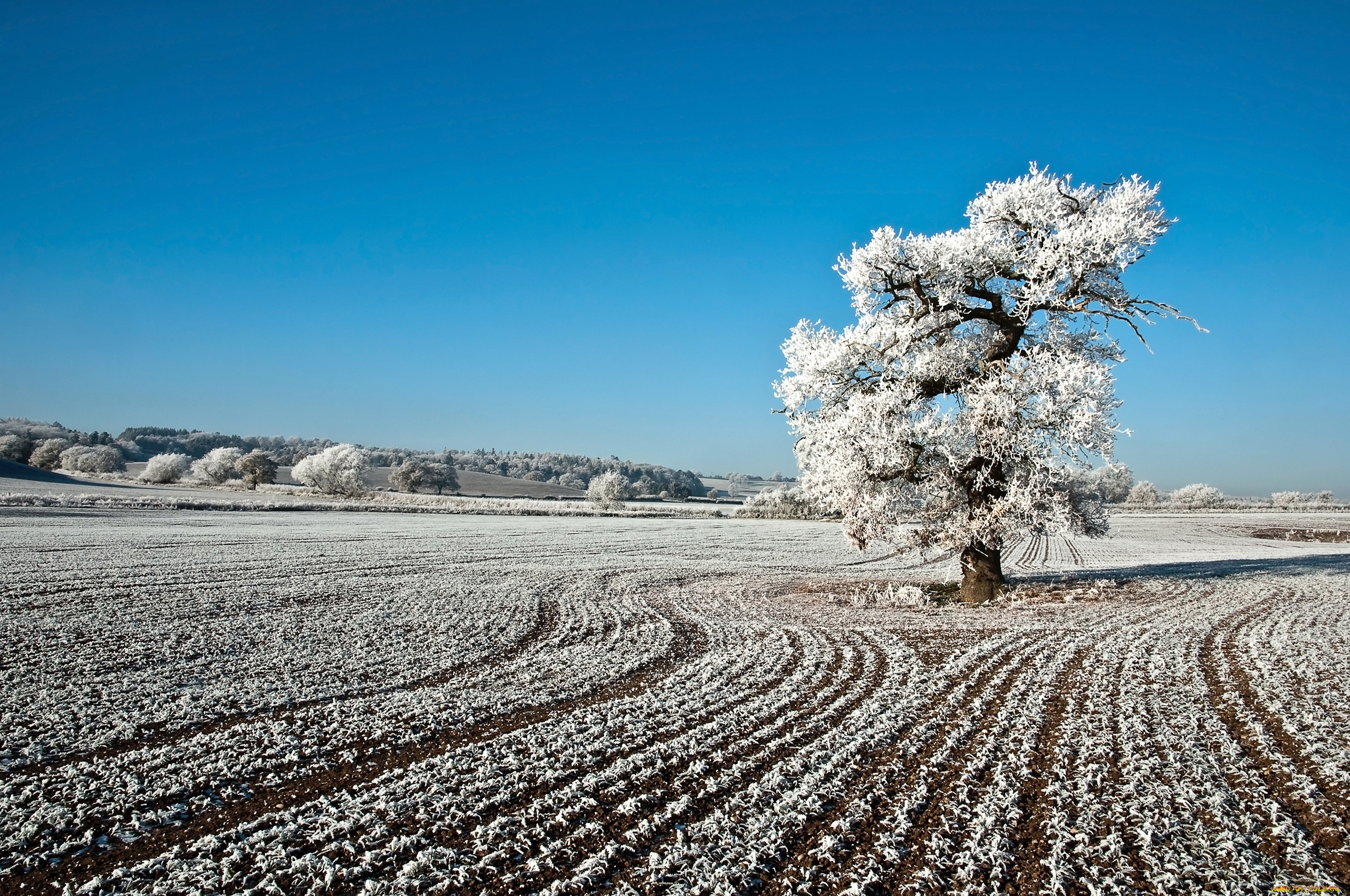 поля зимой фотографии тому же